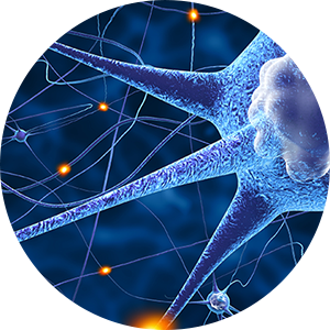 phrenic nerve sending signals