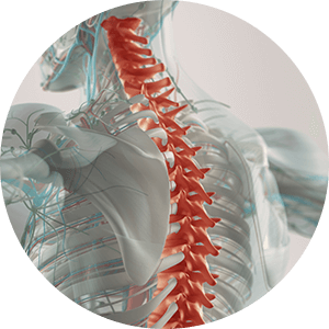 thoracic spine with upper back pain